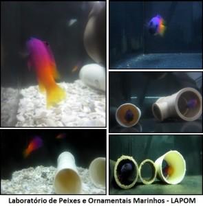 comportamiento de G. brasiliensis - Cópia